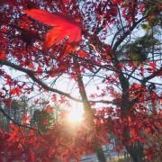 秋の紅葉in山梨県ʕ•̫͡•ʔ