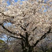 春イメチェンにオススメです🌸