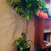 Gardenの植物